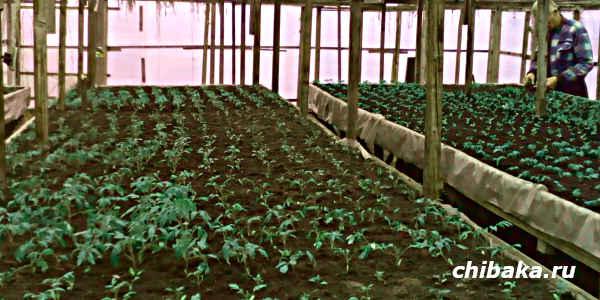 Бизнес на выращивании рассады
