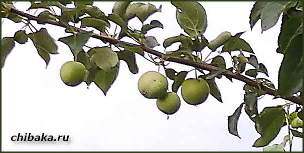 Бизнес на выращивании саженцев деревьев