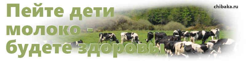 Как заработать на корове