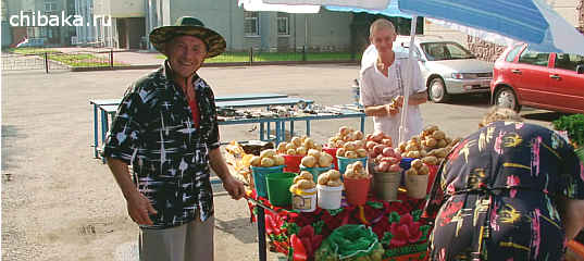 Торговля картошкой