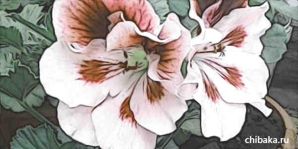 Заработок на комнатных цветах