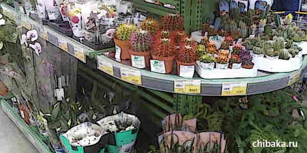 Как заработать на комнатных растениях