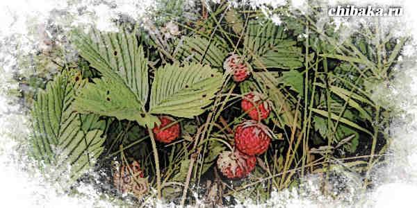 Как заработать на ягодах