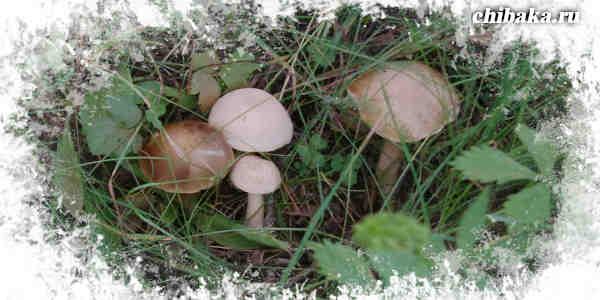 Заработать на грибах
