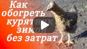 Как обогреть курятник (видео)