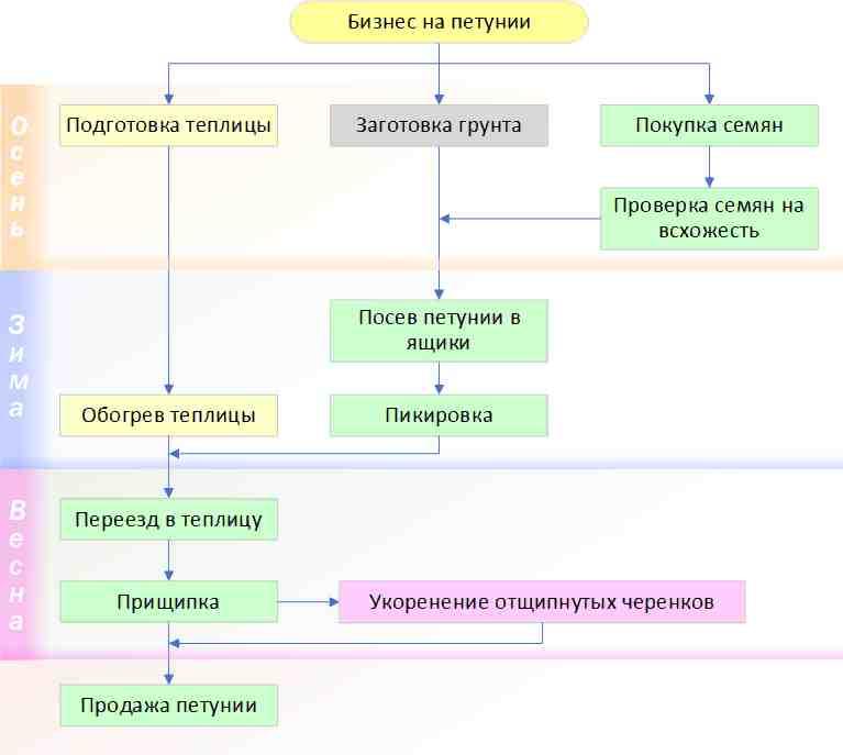Блок схема бизнеса по выращиванию петунии