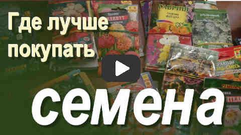 Видео, где лучше купить семена