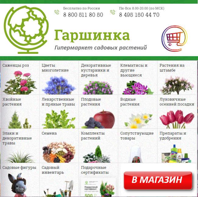 Семена для выращивания рассады на продажу
