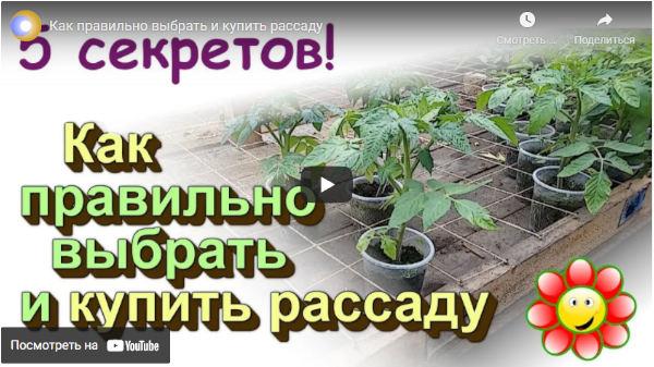 Видео как правильно выбрать и купить рассаду