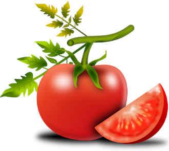 Бизнес на рассаде томатов